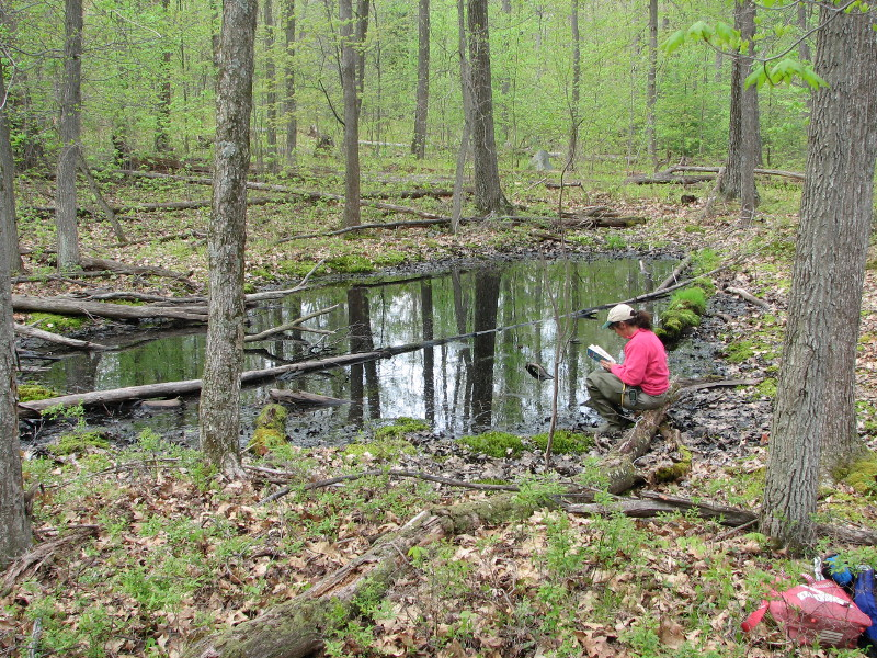 Registering an unvegetated vernal pool can be done easily from the pool edge without entering the water. Photo Credit: Betsy Leppo